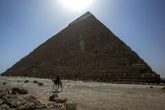 Un camello camina más allá de la pirámide de Khafre en Giza en El Cairo, Egipto Imagen de archivo libre de regalías