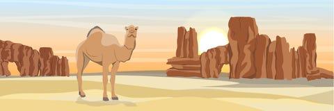 Un camello one-humped en un desierto con las rocas de piedra y la arena amarilla ilustración del vector