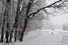 Un caminante solitario lejos a través del bosque congelado foto de archivo