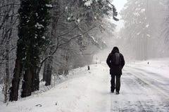 Un caminante solitario a través del bosque congelado foto de archivo libre de regalías