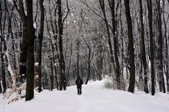 Un caminante solitario a través del bosque nevoso fotos de archivo libres de regalías