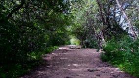 Un camino abandonado a RIF Fort en Kronstadt Isla de Kotlin almacen de metraje de vídeo
