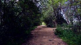Un camino abandonado a RIF Fort en Kronstadt Isla de Kotlin almacen de video