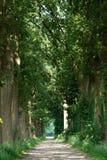 Un camino arenoso con los árboles Fotografía de archivo