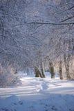 Un camino asoleado en nieve blanca profunda Foto de archivo libre de regalías