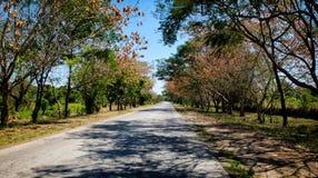Un camino con los árboles que doblan encima Fotografía de archivo libre de regalías