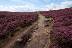 Un camino con un paisaje del brezo Fotos de archivo libres de regalías