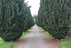 Un camino con una fila de los árboles del tejo con las bayas rojas, cualquier lado imágenes de archivo libres de regalías