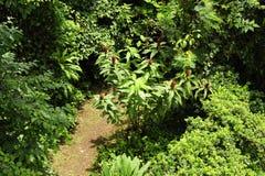 Un camino corta a través un pasillo biológico tropical en Costa Rica foto de archivo