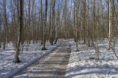 Un camino de tierra en el bosque de la primavera Imagenes de archivo