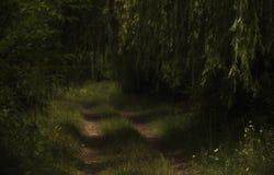 Un camino de tierra en medio de la hierba verde y de árboles Foto de archivo