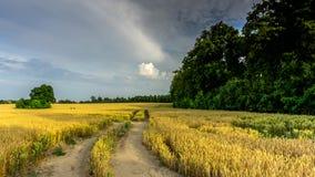 Un camino de tierra a través de un campo del grano almacen de metraje de vídeo