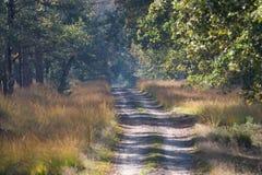 Un camino en el bosque Foto de archivo