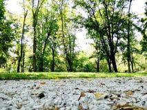 Un camino en el bosque cerca de los árboles imagen de archivo