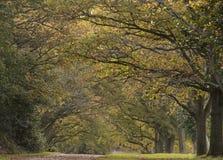 Un camino en el otoño temprano, campo común de Southampton imagenes de archivo