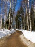 Un camino en el parque Imagen de archivo libre de regalías