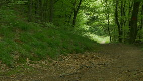Un camino en las maderas almacen de video