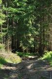 Un camino en montaña Imagen de archivo libre de regalías