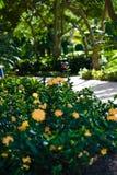 Un camino en un centro turístico tropical Foto de archivo libre de regalías