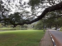 Un camino escénico con la fila de raintrees cerca de un lago fotografía de archivo