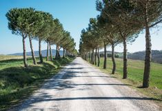 Un camino estrecho con los árboles de pino en fila imagen de archivo libre de regalías