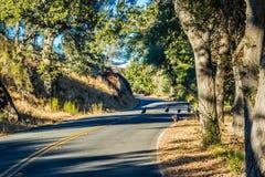 Un camino largo abajo del camino del parque nacional de los pináculos imagenes de archivo