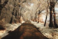 Un camino a lejos imagenes de archivo