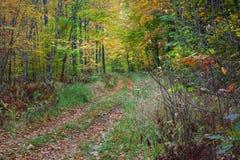 Un camino o un rastro completo el bosque del otoño Foto de archivo libre de regalías