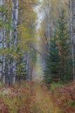 Un camino o un rastro completo el bosque del otoño Foto de archivo