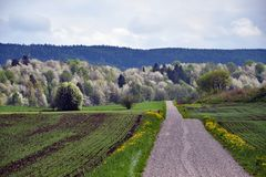 Un camino rural con los cerezos en el fondo imagen de archivo libre de regalías