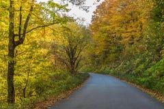 Un camino rural a través de un bosque en la caída Foto de archivo
