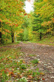 Un camino a través de las maderas Foto de archivo