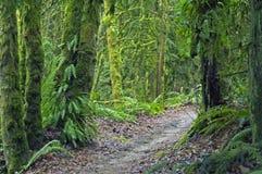 Un camino a través del bosque Foto de archivo libre de regalías