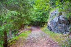 Un camino a través del bosque verde Fotos de archivo libres de regalías