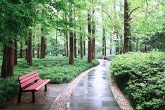 Un camino verde Imagen de archivo libre de regalías