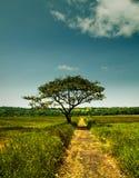 Un camino y un árbol Fotos de archivo libres de regalías