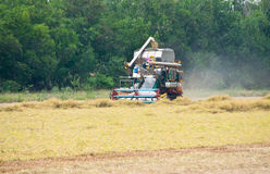 Camion del raccolto del riso Immagine Stock