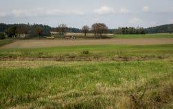 Un camion giallo e un trattore con un funzionamento rosso del rimorchio lungo una piccola strada fra i campi Immagine Stock