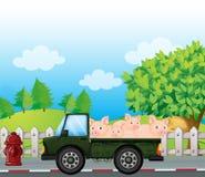 Un camion vert avec des porcs au fond Photo libre de droits