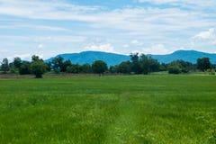 Un campo ancho con los árboles y las montañas Fotografía de archivo libre de regalías