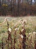 Un campo in autunno fotografia stock