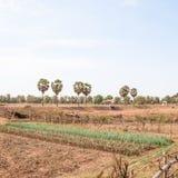 Un campo coltivato Immagine Stock