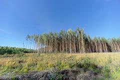 Un campo con erba che ha cominciato ingiallire e legno fotografia stock libera da diritti