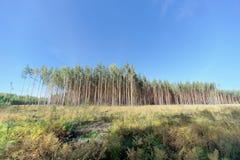 Un campo con erba che ha cominciato ingiallire e legno immagini stock