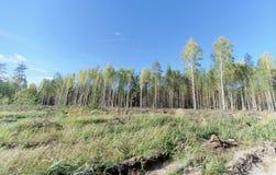 Un campo con erba che ha cominciato ingiallire e legno immagine stock