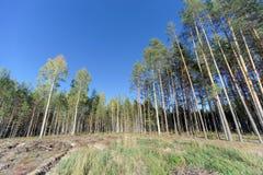 Un campo con erba che ha cominciato ingiallire e legno fotografia stock