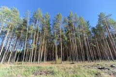 Un campo con erba che ha cominciato ingiallire e legno fotografie stock