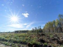 Un campo con erba che ha cominciato ingiallire e legno Sun luminoso nel telaio glare fotografia stock