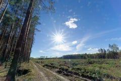 Un campo con erba che ha cominciato ingiallire e legno Sun luminoso nel telaio glare fotografie stock libere da diritti