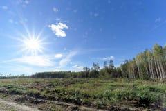 Un campo con erba che ha cominciato ingiallire e legno Sun luminoso nel telaio glare immagini stock libere da diritti